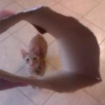 紙の容器にジャンプして着こなす子猫!!