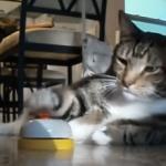 空腹だとベルを鳴らすネコ