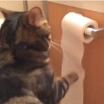 猫「出したらしまう!これ基本ね」