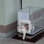 マイエレベーターで降下するオシャレなネコ