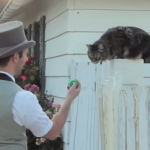 猫にマジックを見せたらこうなった!!