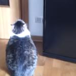 【まばたき禁止】アザラシに変身する猫
