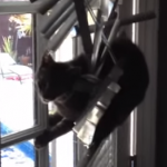 ブラインドを破壊し尽くす猫