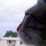 猫「コケコッコー・・・」