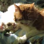 猫「ちょ・・・やめ・・・・やめてってば!!」