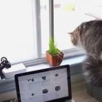 【びっくり注意】窓の外を威嚇する猫を観察していたら・・・
