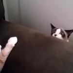 猫「失礼しました…」