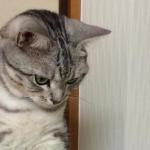 猫「ぼくはなにも知らないんだ・・」