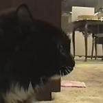 謎の召還呪文を唱える猫