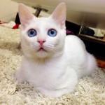 多彩な寝顔を見せる白猫