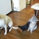カラス「猫ちゃんご飯の時間ですよ~」