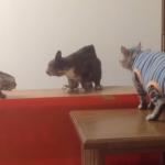 喧嘩に乱入された猫の表情が味わい深い件