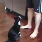 無防備すぎる姿勢で抱っこされる猫
