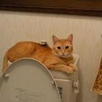 トイレの猫様「この冷たさとフィット感がたまらないにゃ」