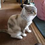 ざるそばの袋に顔を突っ込んでしまった猫