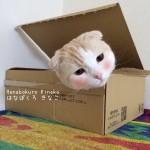 【発 見】アプリを使って猫の頬にチークを入れたら可愛すぎた!!