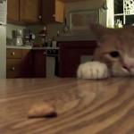 机の上のエサを競技かるたのごとく光速でスマッシュする猫