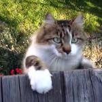 猫が予想外の方向からやってきた件