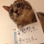 砂糖瓶を割って懺悔する猫