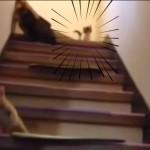 ダイナミックに階段を転がり落ちる仔猫