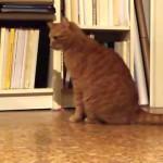 メトロノームにビビりながらも接近する猫
