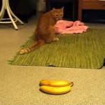 バナナにおかしな攻撃を仕掛ける猫