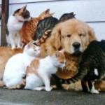 猫まみれになってもやさしいお顔で受け止めきる犬