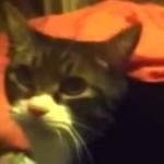 飼い主のハローを求める声に素直にハローで返す猫