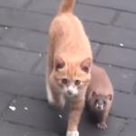 「猫大好き!」子イタチになつかれた仔猫が可愛い