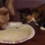 犬「このご飯とお皿は僕のです!あげません!」猫「・・・」