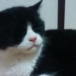 【奇跡】7年前に行方不明になった猫が無事帰宅!!