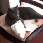 猫「今から変身するから見ててね!」