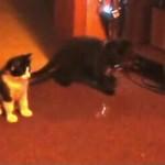 シャボン玉を怖がりながら割る猫