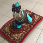 【発想の勝利】空飛ぶ魔法の絨毯に乗る猫