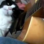 確実に撫でてもらえる方法を知っている猫