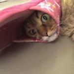 猫「スリッパで遊んでただけなのに・・・」