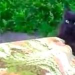 アクション映画のように帰宅する黒猫