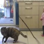 どっちも可愛い!猫の遊ぶ様子がツボに入った赤ちゃん
