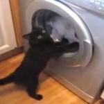洗濯機と熾烈な戦いを繰り広げる黒猫が可愛い