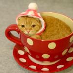 猫「ここが落ち着くにゃー」ティーカップが大好きなにゃんこ