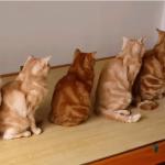 律儀に体重測定を待つ猫たち