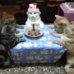 お誕生会に集う猫たちがお行儀が良すぎる件