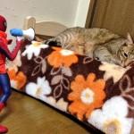 スパイダーマンと戯れる猫達が可愛すぎる件