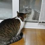 まるで恋愛映画のワンシーン!かと思わせてただ喧嘩を売っているだけの猫