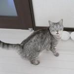 ご飯を食べた後に「カリカリが消えたよ!どうして!?」みたいな顔で飼い主を見つめる猫