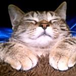 生まれて初めてコタツに入った猫