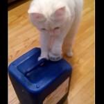 飼い主は涙目!?カリカリが入ったポリタンクを開ける猫