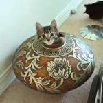 まるで妖精!花瓶で出たり入ったりと遊ぶ猫達