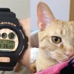 猫柄にカスタマイズされたG-SHOCKが可愛すぎる