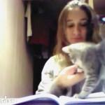 子猫のおかげで全く勉強が出来ない女の子